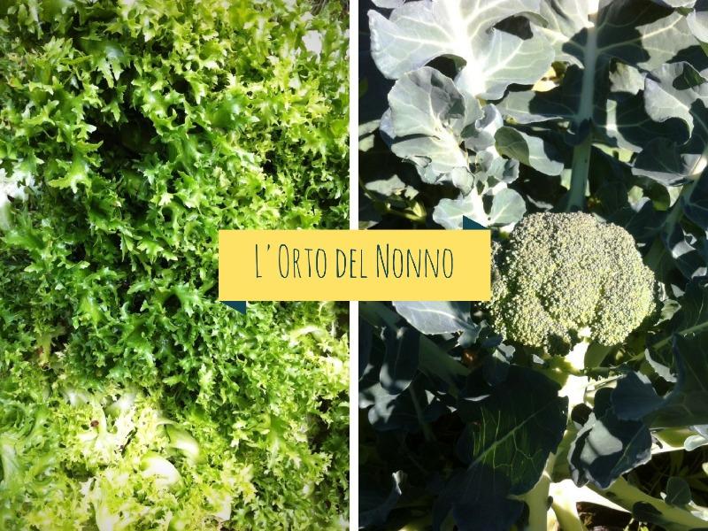 Broccolo Siciliano e Indivia dei Castelli Romani